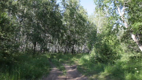 Steadycam shot - flying through forest Footage