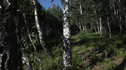 Sun, Forest.