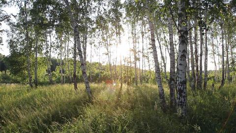 Sun, Forest. 2