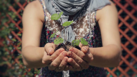 A Small Plant in a Woman's Hands Stock Video Footage