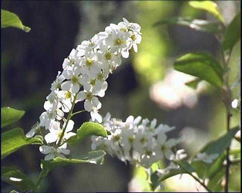 Flowerses Stock Video Footage