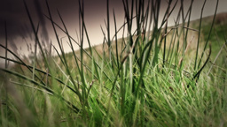 Long Grass stock footage
