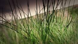 Long Grass Stock Video Footage