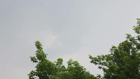 White lightning strike during summer storm Stock Video Footage