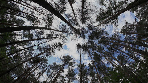 Timelapse in the summer forest with tree trunk and Stock Video Footage