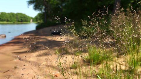 field herb Stock Video Footage