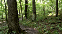 Forest Path Stock Video Footage