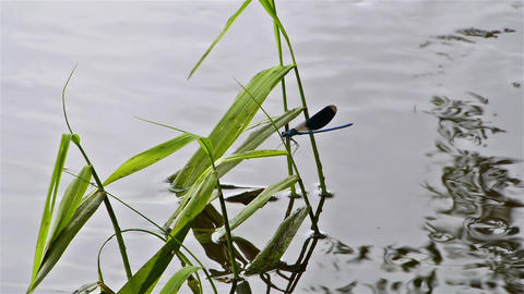 Dragonfly on a leaf Stock Video Footage