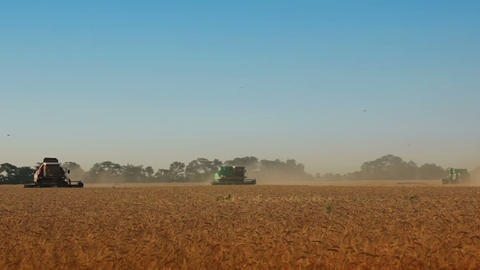 Harvesting. Many harvesters Stock Video Footage