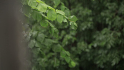 Rain and grean leaves. Focus pulling Stock Video Footage