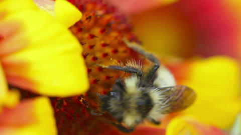 Busy bee Footage