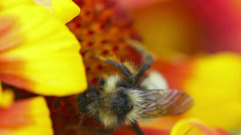 Busy bee Stock Video Footage