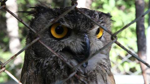 owl HD Stock Video Footage