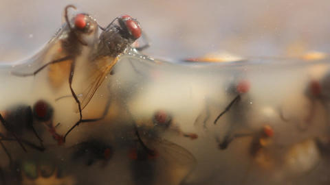 Dead flys on a insect catcher flypaper pest contro Stock Video Footage