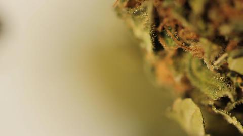 medical marijuana grass medical cannabis THC Stock Video Footage