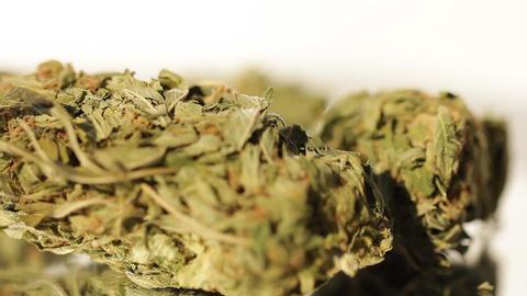 medical marijuana grass medical cannabis THC Live Action