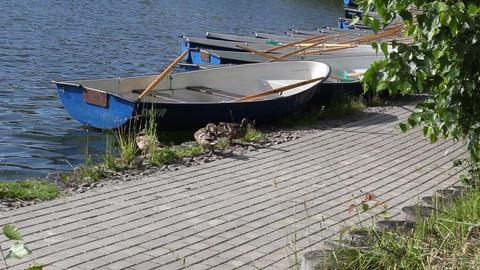 Ducks near the boat 2 Stock Video Footage