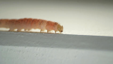 Caterpillar Stock Video Footage
