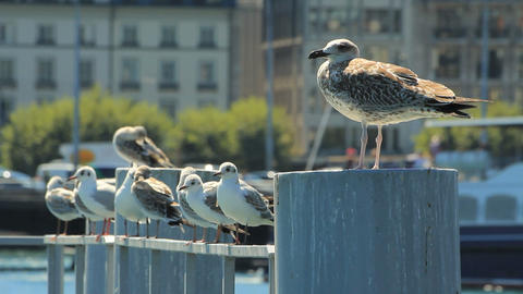 Seagulls in town Stock Video Footage