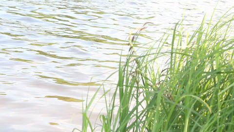 The grass near the water Stock Video Footage