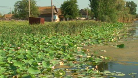 A pond with lilies Stock Video Footage