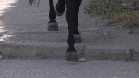 The horses ' hooves on the pavement Stock Video Footage