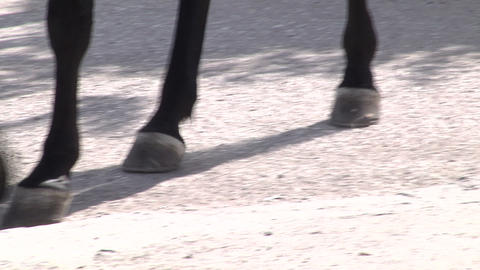 The horses ' hooves on the pavement Footage