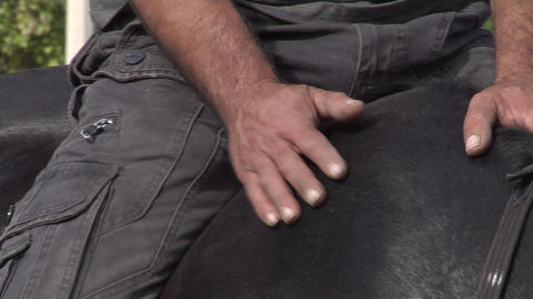 Man stroking the black horse Stock Video Footage