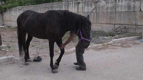 Cleaning the hooves of horses Footage