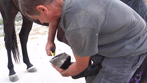 Cleaning the hooves of horses Stock Video Footage