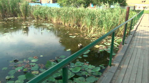 Wooden bridge and pond with lilies Footage