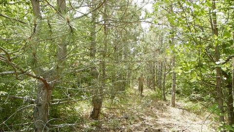 A man walks through the woods Footage