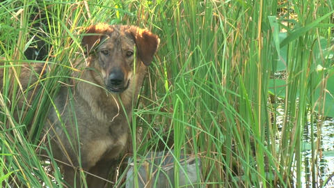 Dog in the grass Stock Video Footage