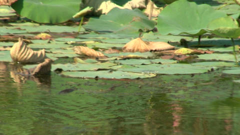 Snake floating on water Stock Video Footage
