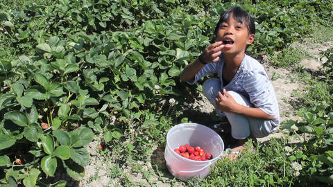 Little Asian Girl Eats Freshly Picked Strawberry Footage