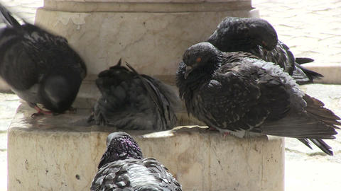 Pigeons and Fountain Stock Video Footage