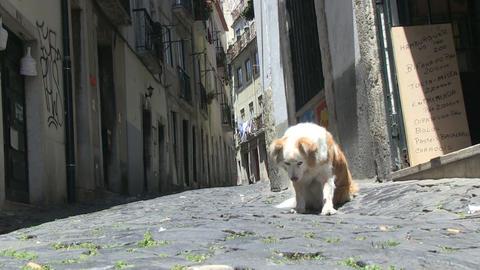 Street dog Footage
