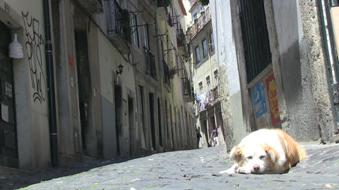 Street dog Stock Video Footage