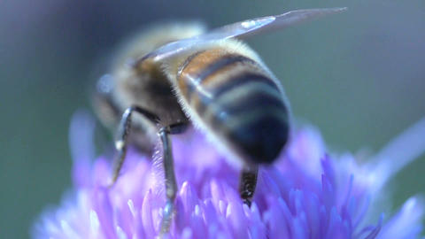 Bee flying away Stock Video Footage