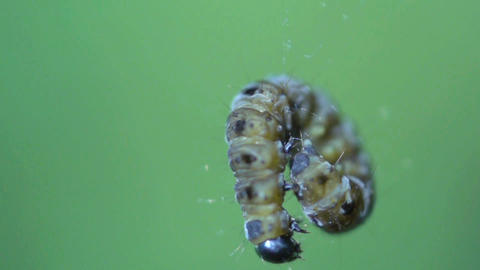 caterpillar rotate in slow motion Footage