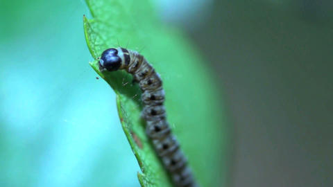 caterpillar slow motion Stock Video Footage