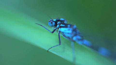 Blue dragonfly extreme close up Stock Video Footage