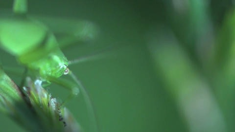 Green bug Stock Video Footage