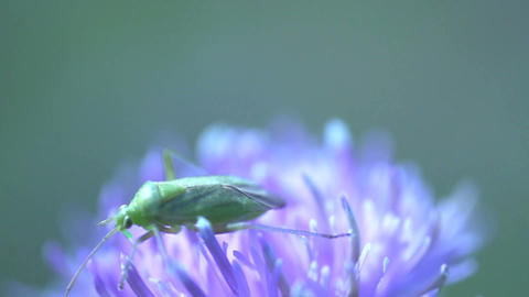 Little green insect Stock Video Footage