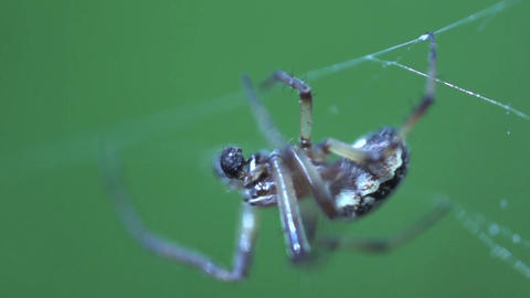 Spider extreme close up Live Action