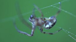 Spider extreme close up Stock Video Footage