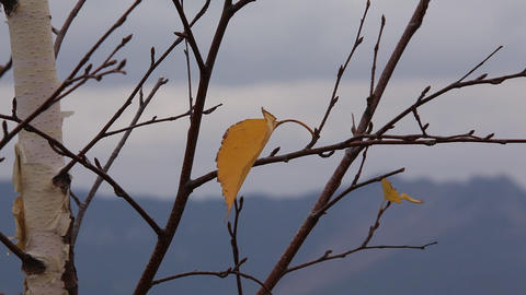 Last autumn leaf Stock Video Footage