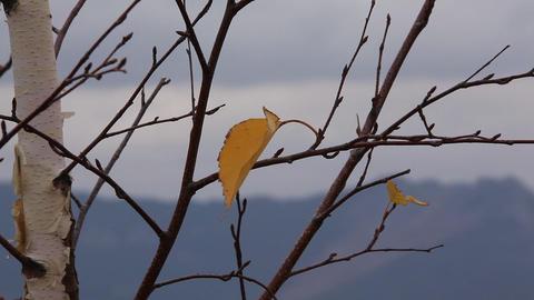 Last autumn leaf Stock Video Footage