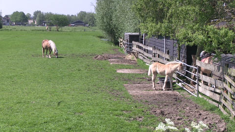 Horses Pasture Stock Video Footage