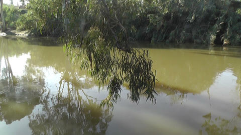 Swimming ducks on a river Stock Video Footage